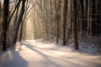 Fresh Snowfall at Dawn; FDR state park